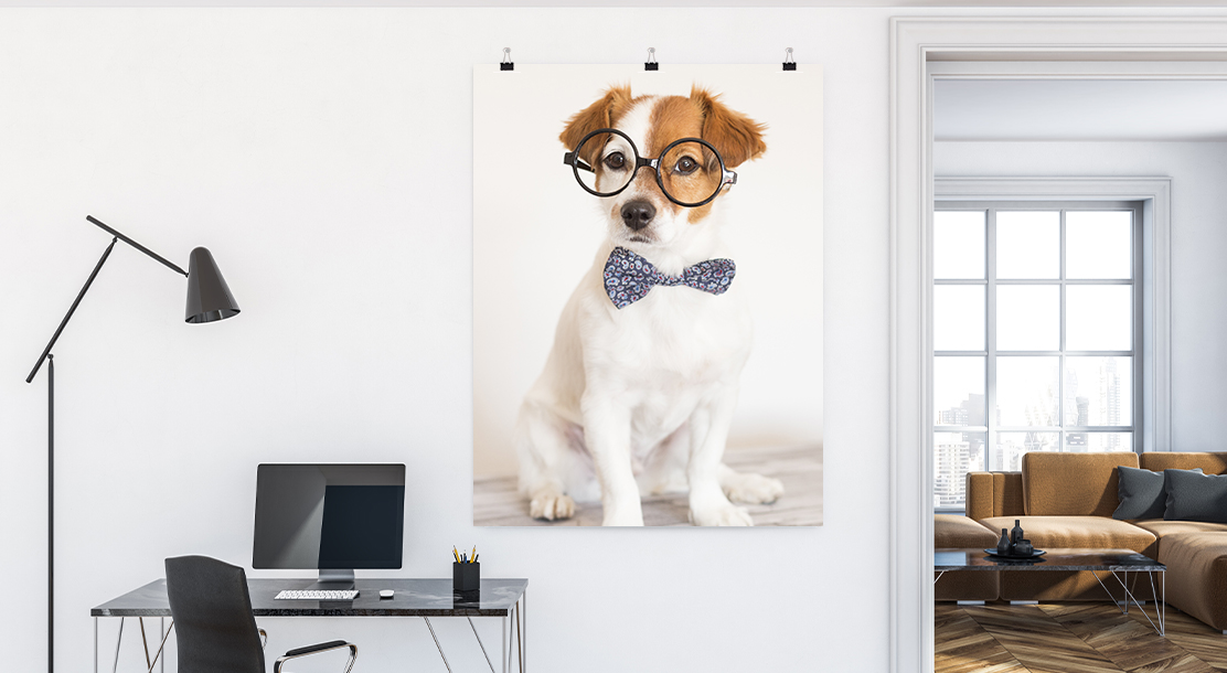 Minimalist home office with white walls displays an oversized poster of a tiny puppy. Puppy is wearing a bow-tie and glasses, looking very professional. Poster is hung with black diner clips.