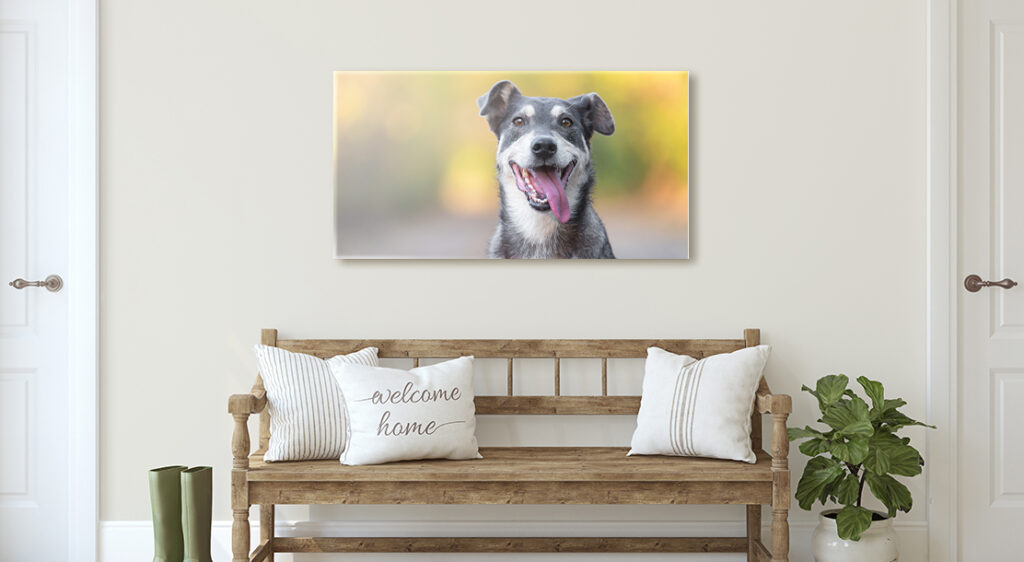 A canvas print hands in a front entry way styled with a wooden bench, rain boots and a large houseplant. The canvas portrays a very cute image of a grey dog, posing with its tongue hanging out as if it is smiling for the camera.
