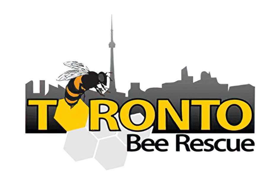 Toronto Bee Rescue